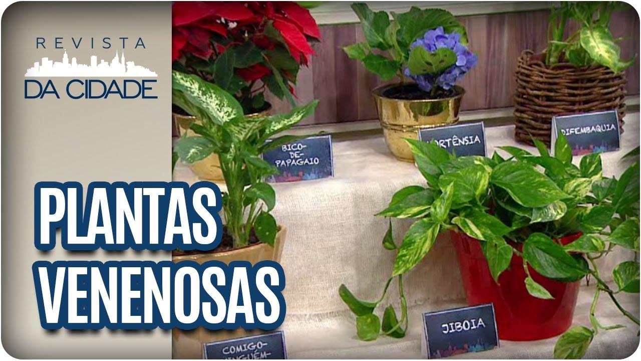 Cuidados com plantas venenosas revista da cidade 27 06 - Plantas venenosas de interior ...