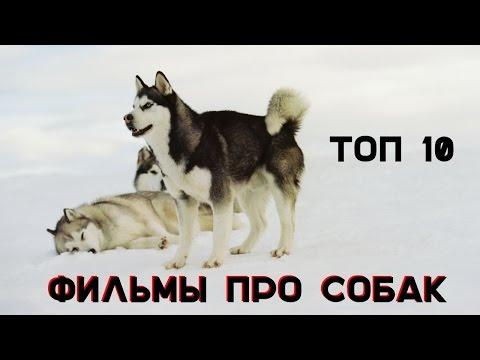 10 фильмов про собак, которые стоит посмотреть
