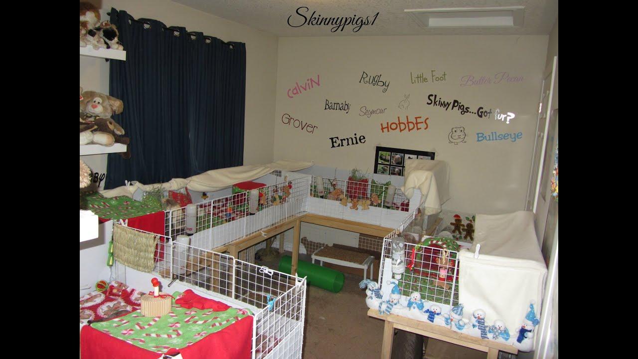 Guinea Pig Room Ideas