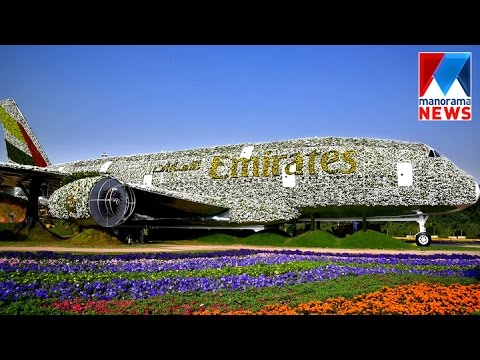 Emirates Air bus 380 blossoms at Dubai Miracle Garden | Manorama News