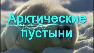 """Копия видео """"Арктические пустыни"""""""
