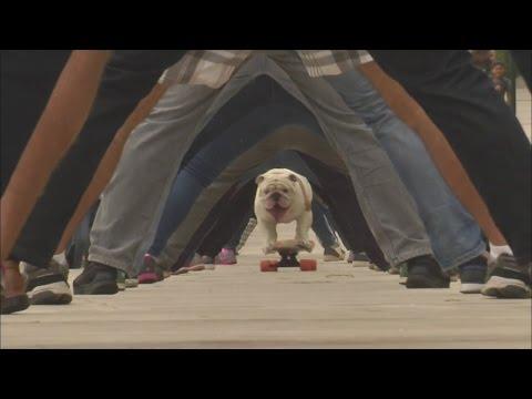 Skateboarding Dog Breaks World Record