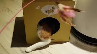 고양이장난감 추천