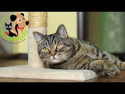 Кастрировали кота, когда менять корм?