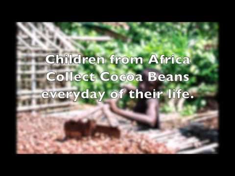 Cocoa From Africa