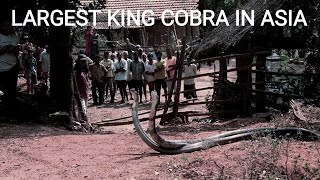 Largest King Cobra Inside The Town