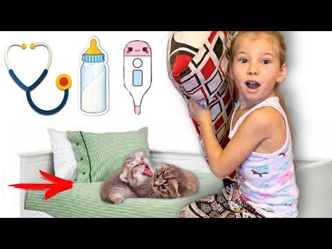 Маленькие милые котята мяукают, Яна кормит котят молоком и проверяет их здоровье.