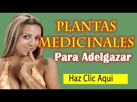 Plantas medicinales para adelgazar barriga con