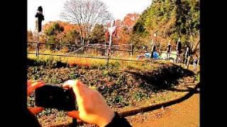 モーモールルギャバン - 琵琶湖とメガネと君