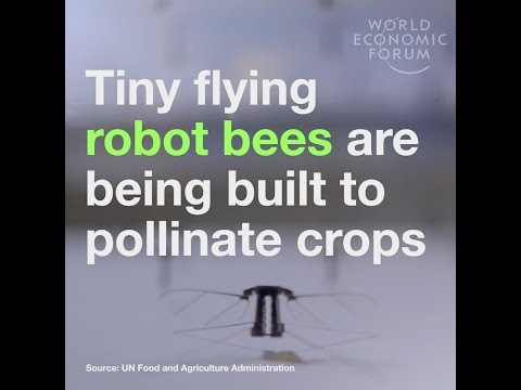 Tiny flying robot bees are being built to pollinate crops