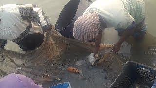 #Fish_Catching | Fishing Videos | Fish Catching Videos | Fish | Fishing | (Part -33) #VillageFish