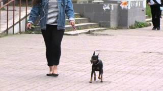 Собаки Петербурга