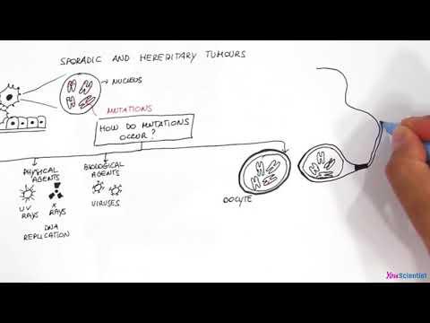 Sporadic and hereditary tumours