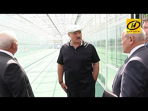 Александр Лукашенко посетил тепличное хозяйство Минской овощной фабрики
