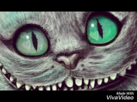 15 милых и интересных картинок Чеширского кота!!!