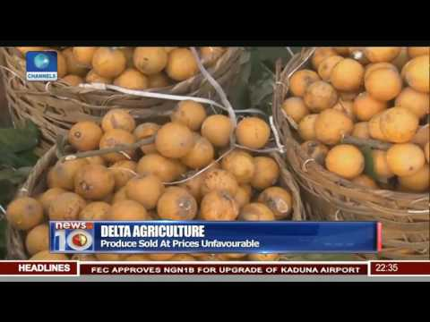 Delta Agriculture: Farmers In Igbodo Community Lament Poor Infrastructure