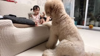 The Behavior of a Dog in Dealing with a Frightened Child