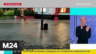 Дерево упало в павильон станции Бутово на МЦД-2 - Москва 24