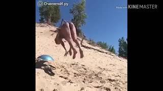 Смешные видео - ОчепяткИ.ру