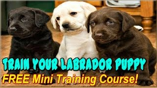 √ √ √  How To Train A Labrador Retriever  Puppy ☼ Free Course ☼ How To Train Labradors ♥ ♥ ♥