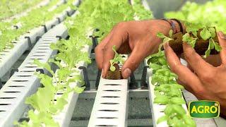 Hidroponia, Producción De Cultivos Sin Tierra (#809 2019-02-02)
