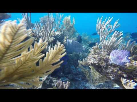 Pauly Dangerous Freedives The Bahamas