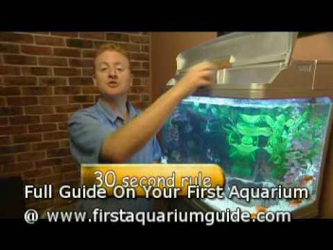 How To Feed Fish In Your Aquarium (Beginners How To Guide)