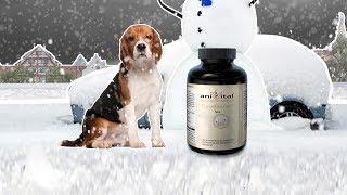 aniVital CaniDerm – для здоровья кожи и шерсти у собак и кошек