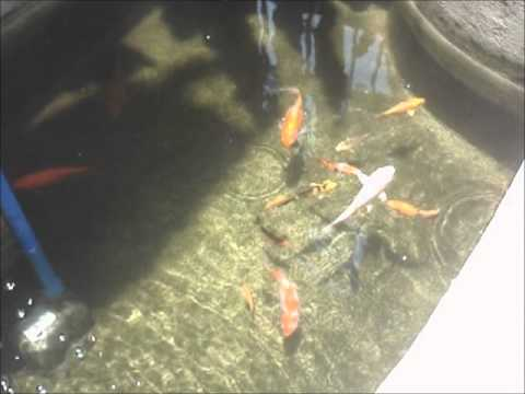 Diy filter on a small koi pond doovi for Homemade koi pond filter