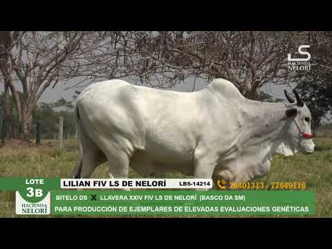 Lote 3B Lilian FIV LS