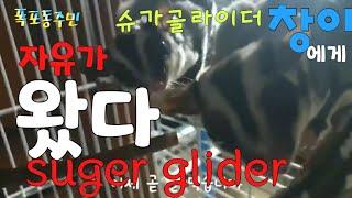 [kobo jeong] 슈가글라이더 창이의  자유가 드…
