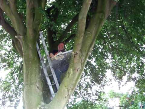 boomtak op carpoort