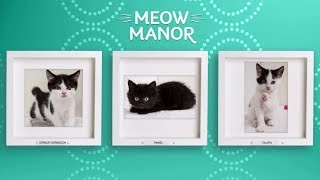 Meow Manor - Watch Adorable, Playful Cats Wednesdays at 8 PM ET on UP!