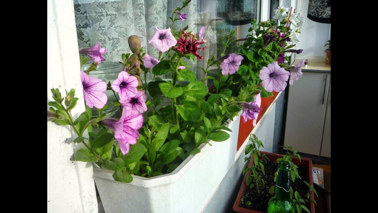 MY terrazze fiorite! - YouTube