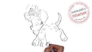 Рисовать карандашом картинки собак  Как нарисовать ребенку собаку карандашом