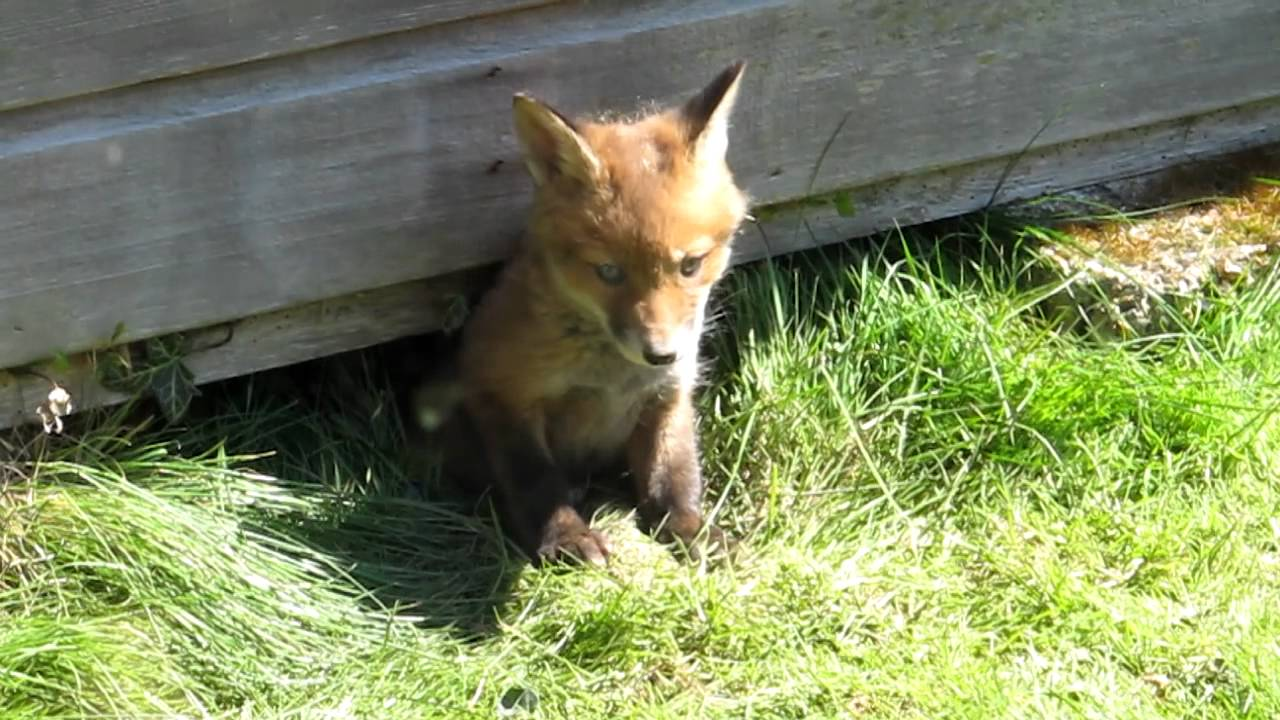 Image Result For How To Keep Animals Out From Under Your Shed