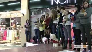 модное дефиле Cats & Dogs в Тюмени