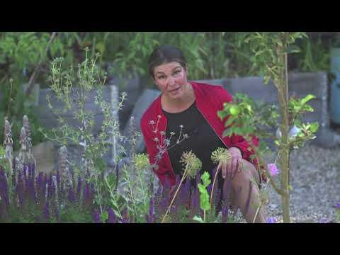Rådjurssäkra växter i trädgården och odla i växthus på sommaren 15 växter rådjuren INTE äter