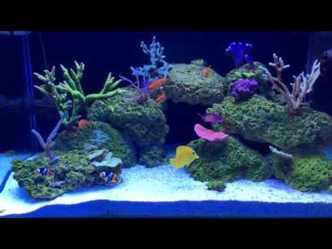 Sps reef