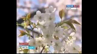 видео Алтайский маральник