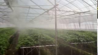 딸기 육묘장 무인방제기 안개 분무 영상