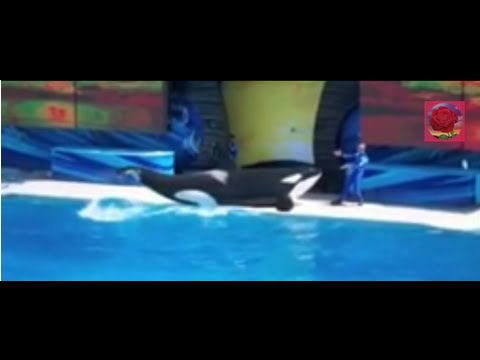 Carlifornia Travel Destination & Attraction | Visit Seaworld San Diego dolphin Show