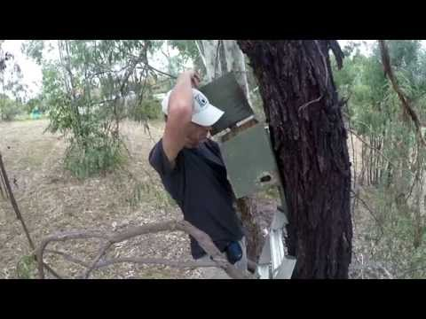 The Art of Nest Boxes