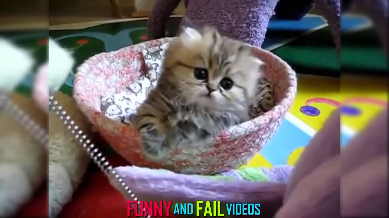 Funny Cat Videos Ever | #1 - YouTube Funny Videos Cats