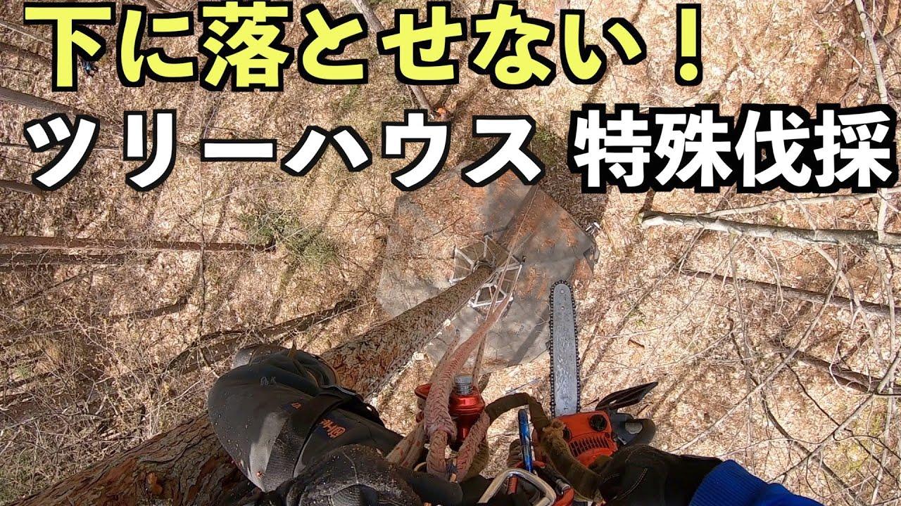 【特殊伐採】フルバージョン(70分版)(千年の森「ツリーハウス」のホストツリー伐採に立ち合い) ■日本の山を支える多くの林業者。命をかけた林業の生の現場。ぜひ伐採する本人になった気持ちでご覧下さい。