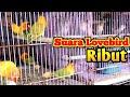 Suara Lovebird Ribut Sangat Efektif Untuk Pancingan Lovebird Agar Nyaut Dan Emosi  Mp3 - Mp4 Download