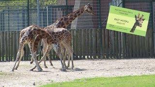 Zoo w Gdańsku Oliwie [HD]