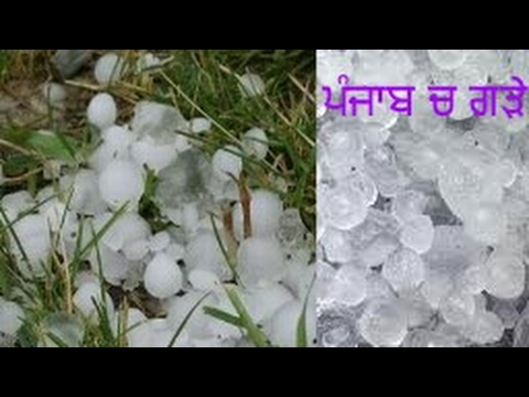 Never expected hailstones like this in punjab