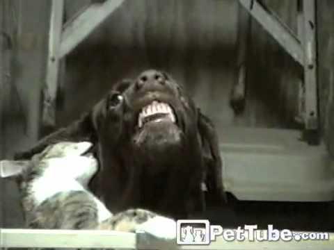 Cat Kisses Make Dog Smile- PetTube