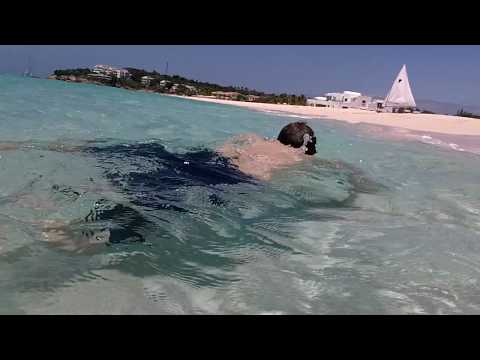 Roger frolicking in the blue green waters of Anguilla